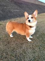 柳田さん犬1.jpg