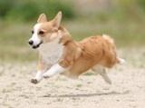 柳田さん犬2.jpg