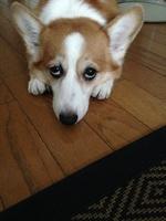 柳田さん犬3.jpg